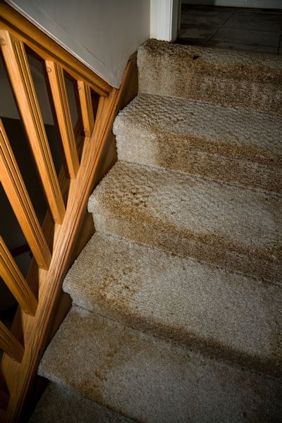 Staircase with water damaged carpet